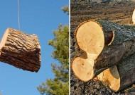 Abattage d'arbres à Angers 49